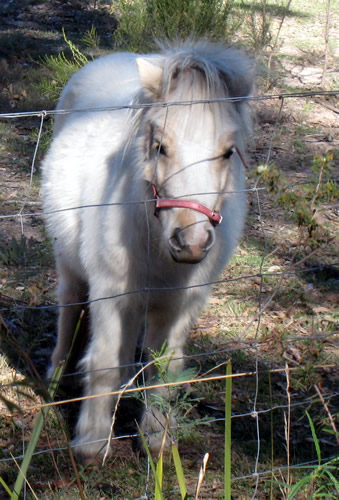 Pony on Long Point Rd
