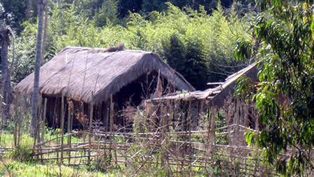 Thatched Sheds